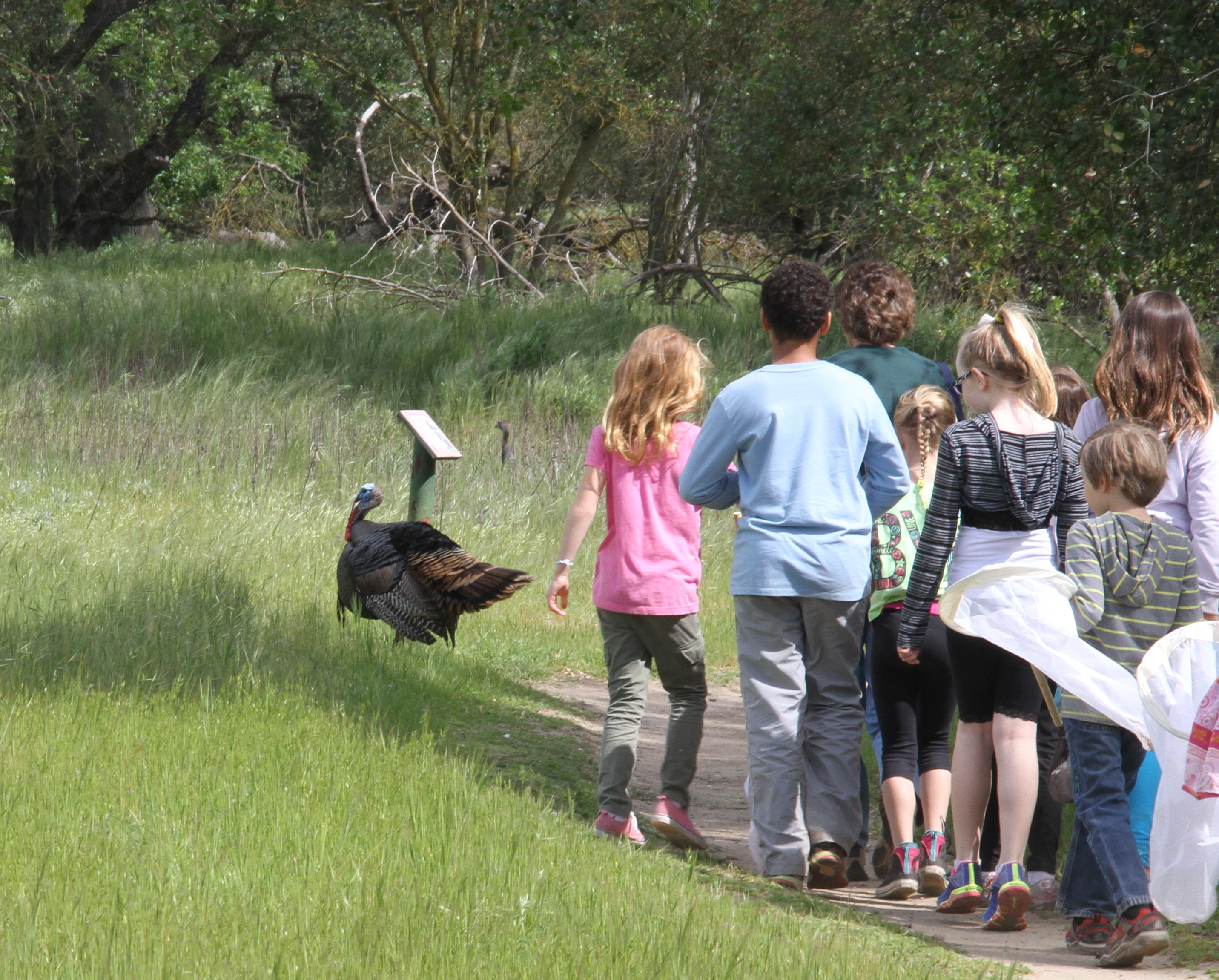 kids see a turkey on the trail