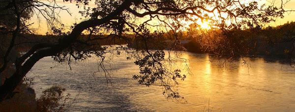 American River Photo