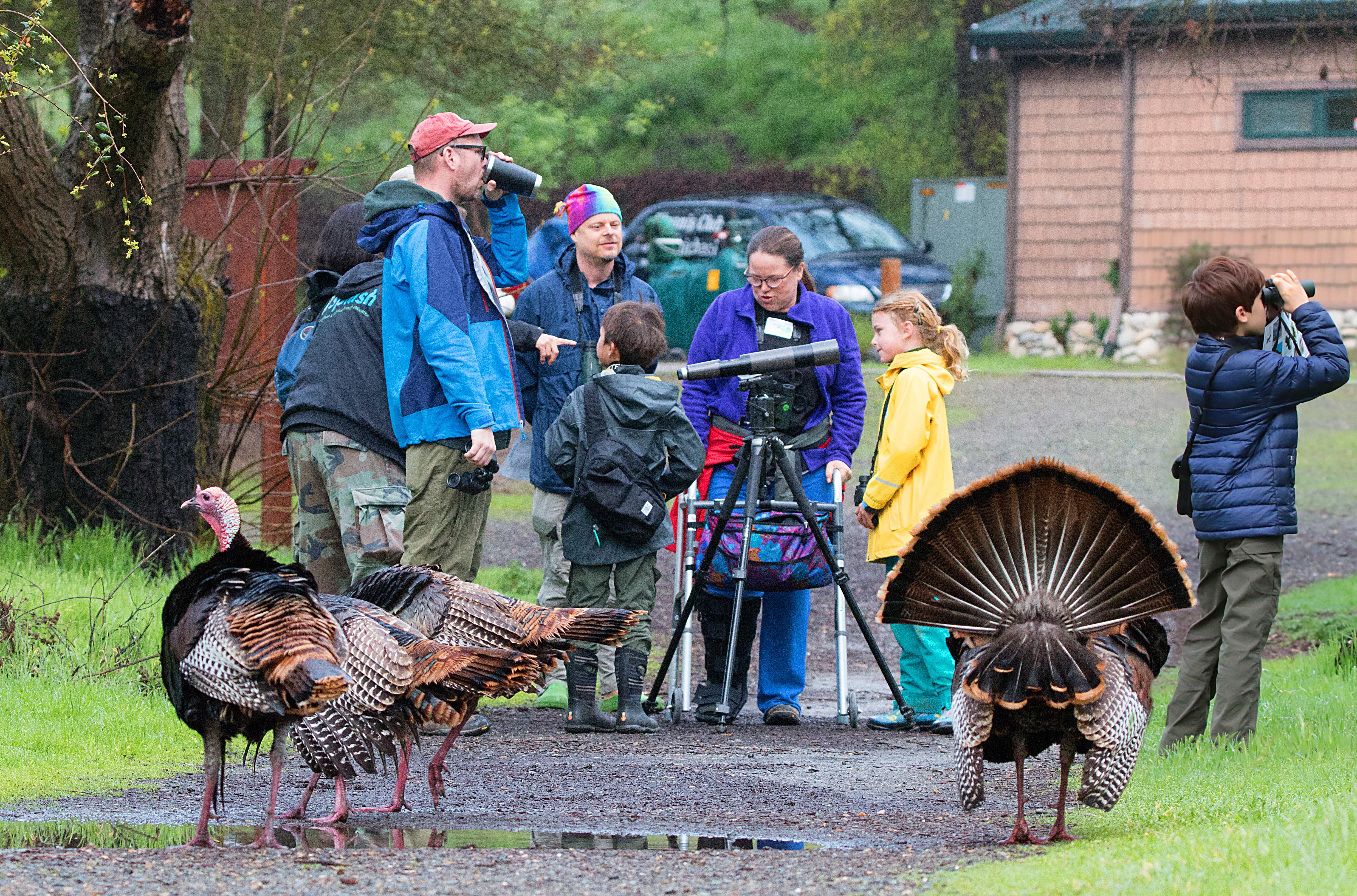 People birding and turkeys people watching