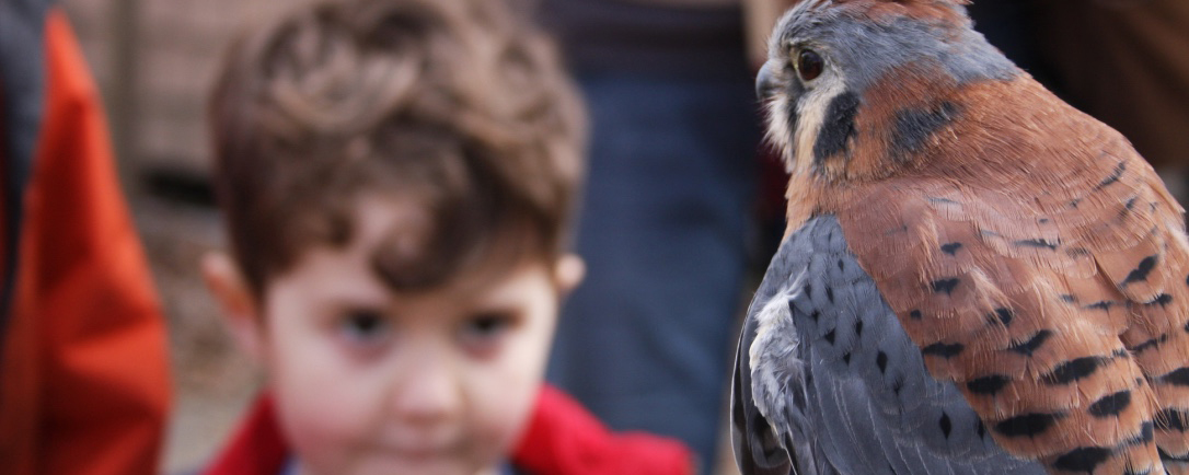 Boy Looking at Small Hawk